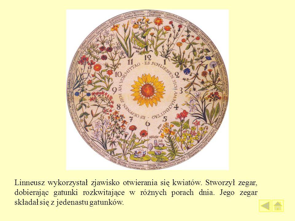 Linneusz wykorzystał zjawisko otwierania się kwiatów