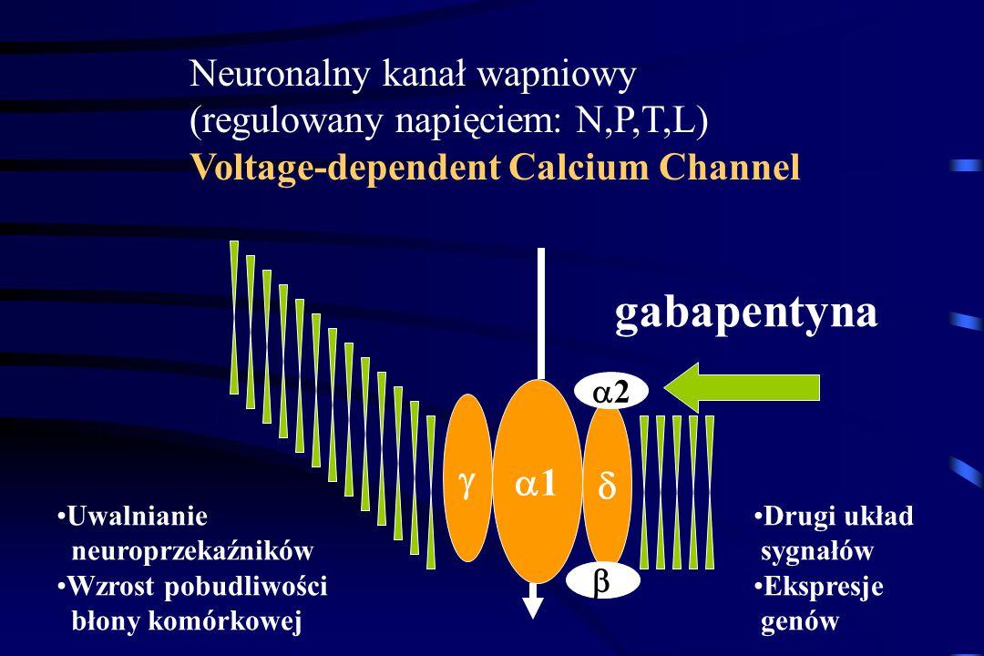 gabapentyna Neuronalny kanał wapniowy (regulowany napięciem: N,P,T,L)