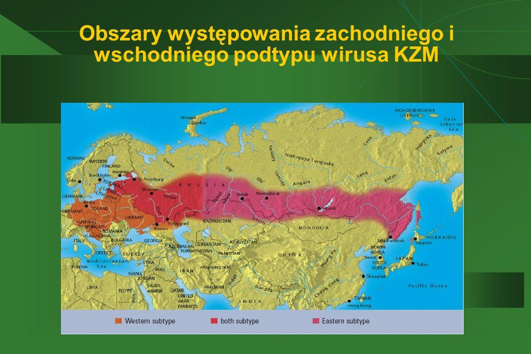 Obszary występowania zachodniego i wschodniego podtypu wirusa KZM