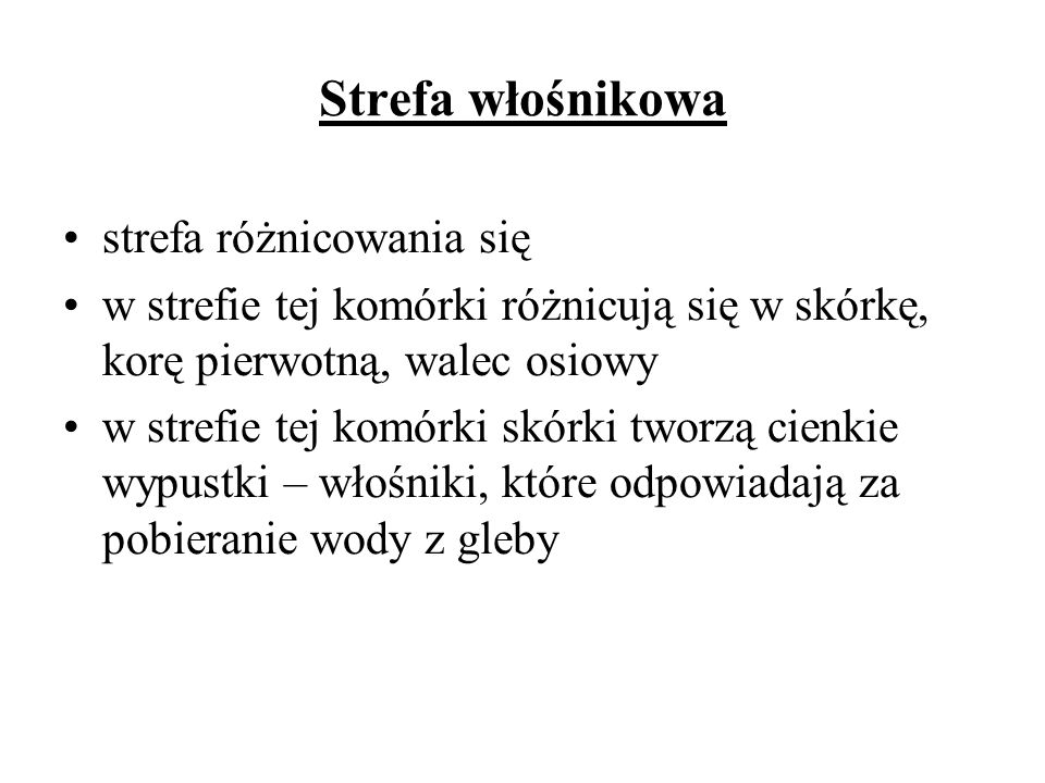 Strefa włośnikowa strefa różnicowania się