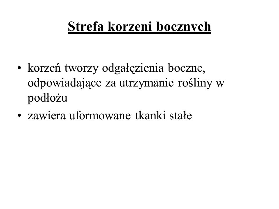 Strefa korzeni bocznych