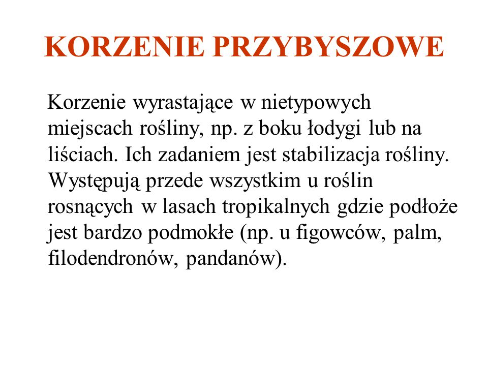 KORZENIE PRZYBYSZOWE