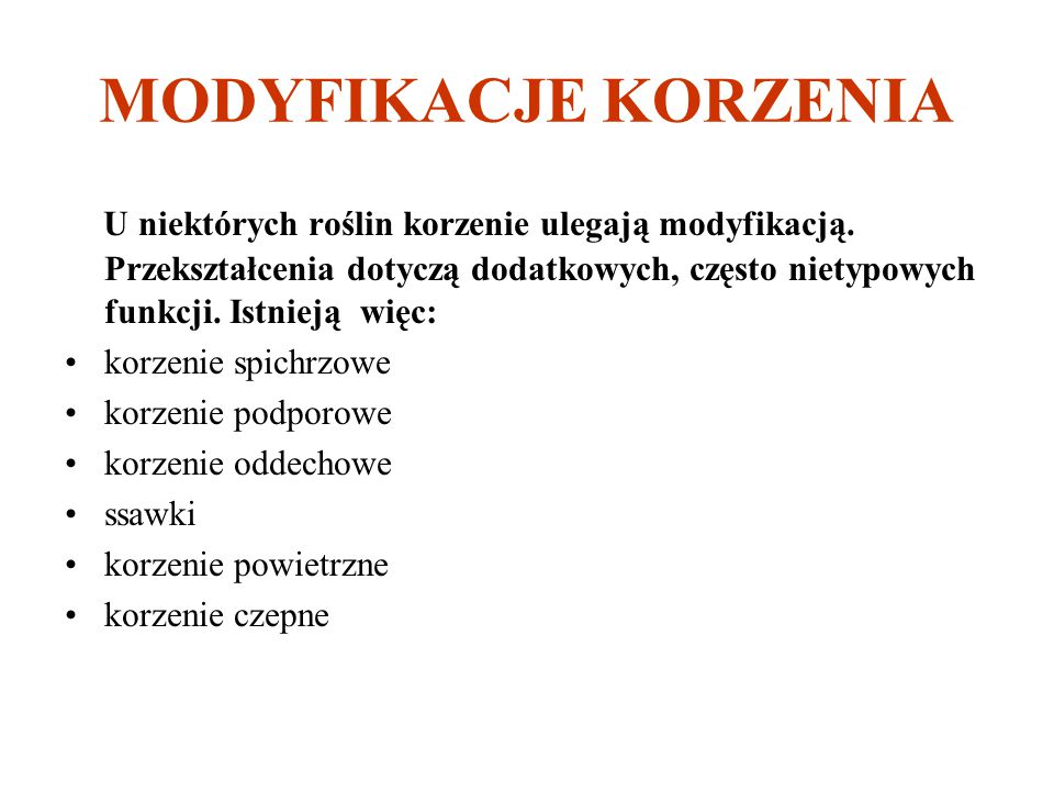 MODYFIKACJE KORZENIA