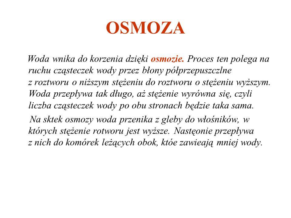 OSMOZA