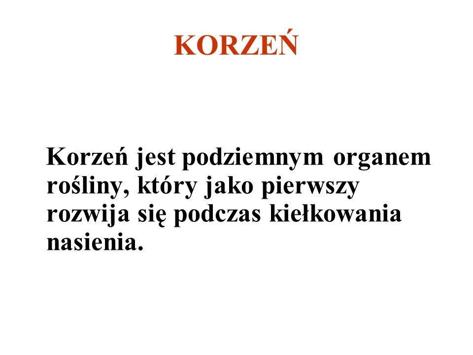 KORZEŃ Korzeń jest podziemnym organem rośliny, który jako pierwszy rozwija się podczas kiełkowania nasienia.