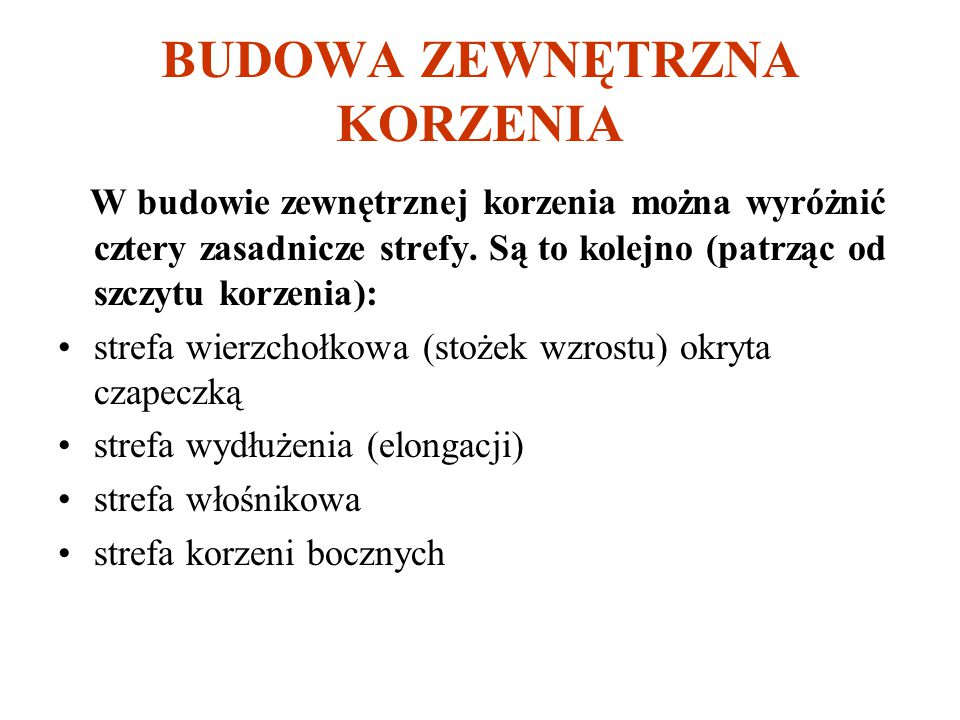 BUDOWA ZEWNĘTRZNA KORZENIA
