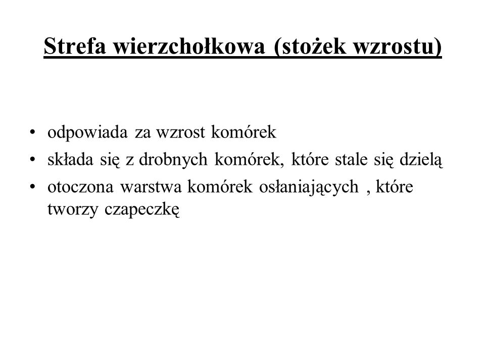 Strefa wierzchołkowa (stożek wzrostu)
