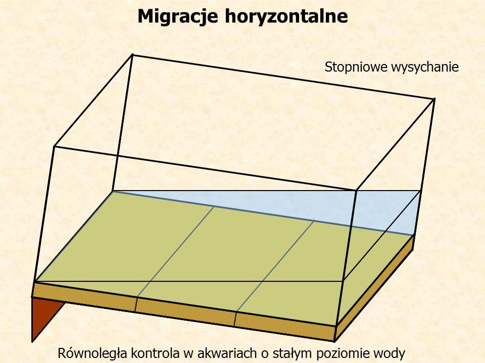 Migracje horyzontalne