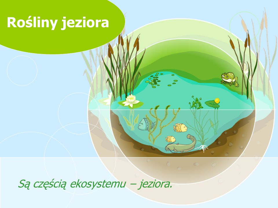 Są częścią ekosystemu – jeziora.