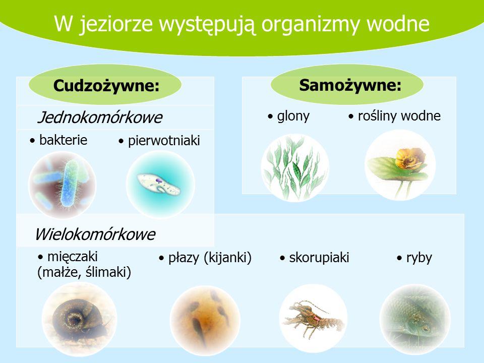 W jeziorze występują organizmy wodne