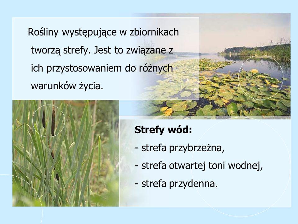 Rośliny występujące w zbiornikach