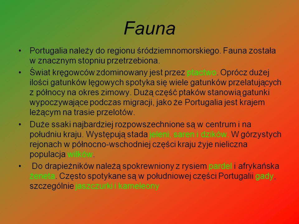 Fauna Portugalia należy do regionu śródziemnomorskiego. Fauna została w znacznym stopniu przetrzebiona.