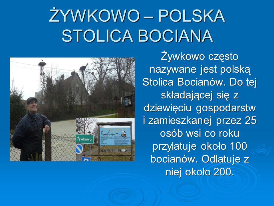ŻYWKOWO – POLSKA STOLICA BOCIANA
