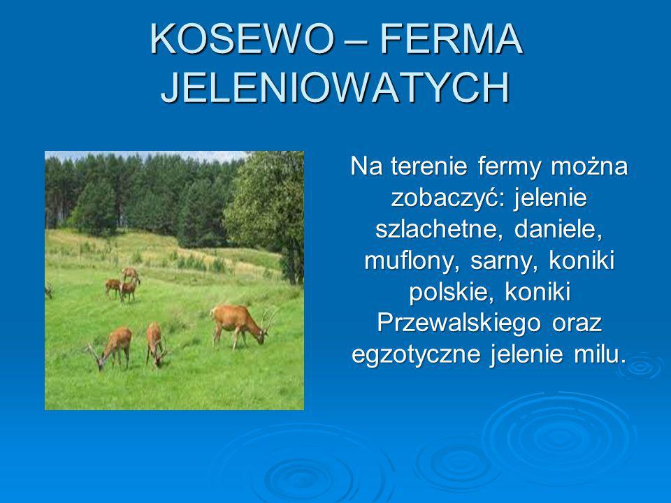 KOSEWO – FERMA JELENIOWATYCH