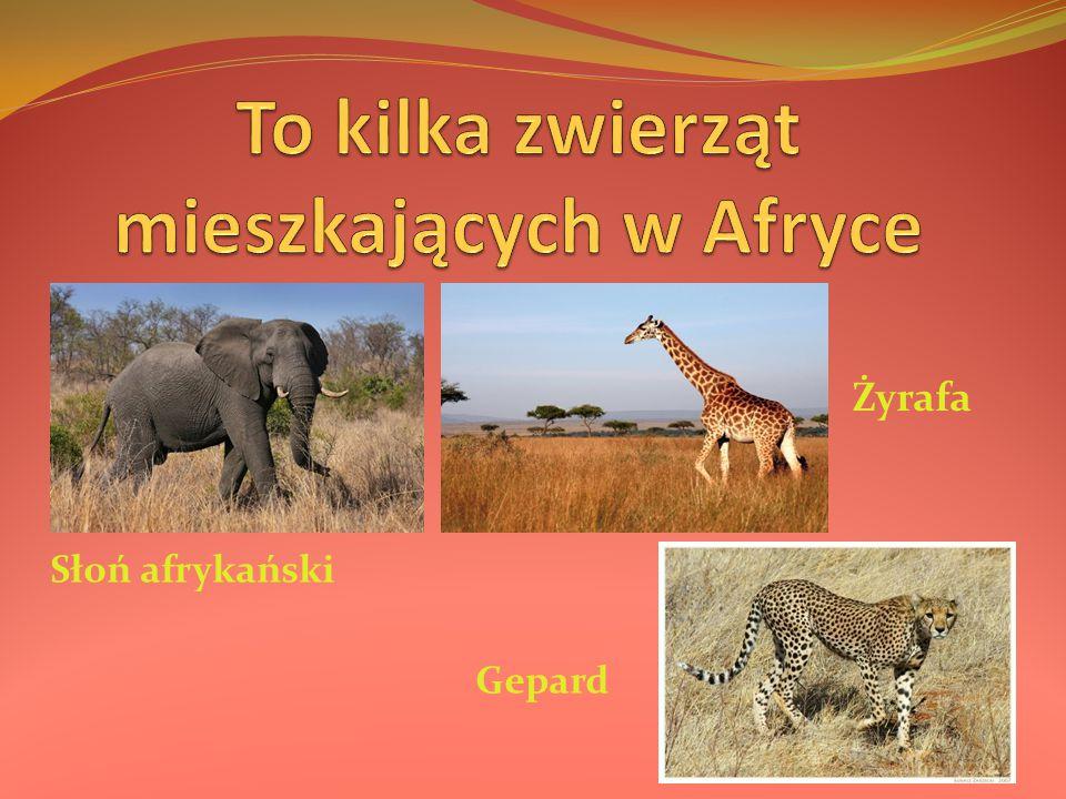 To kilka zwierząt mieszkających w Afryce