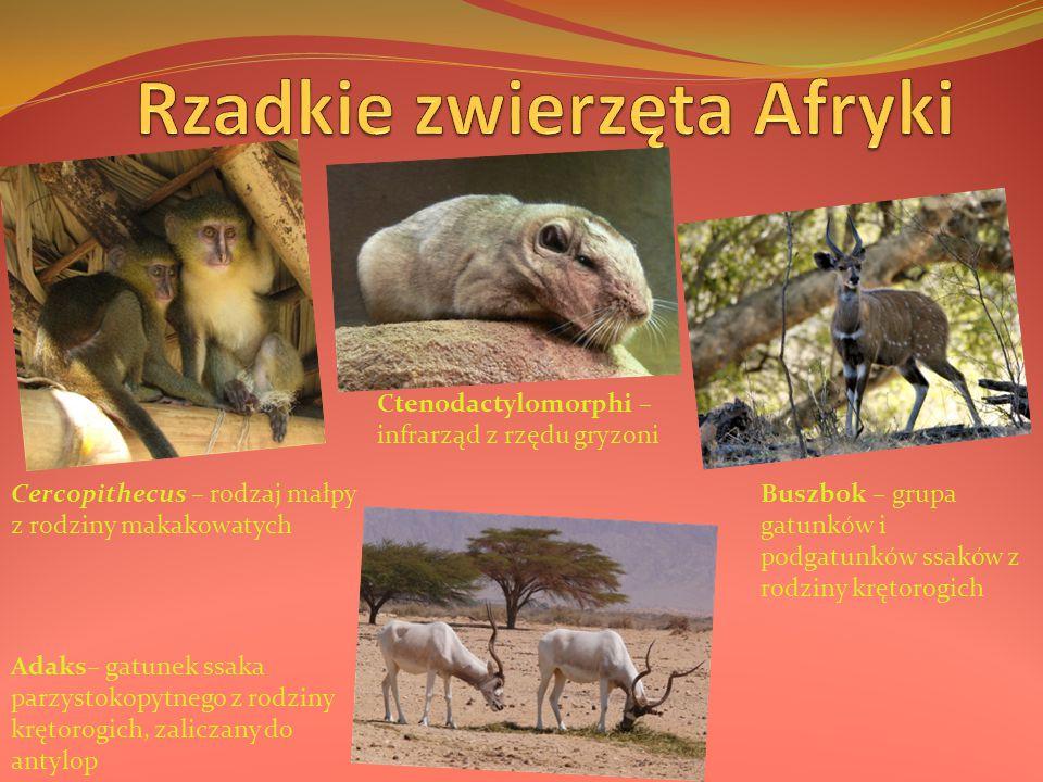 Rzadkie zwierzęta Afryki