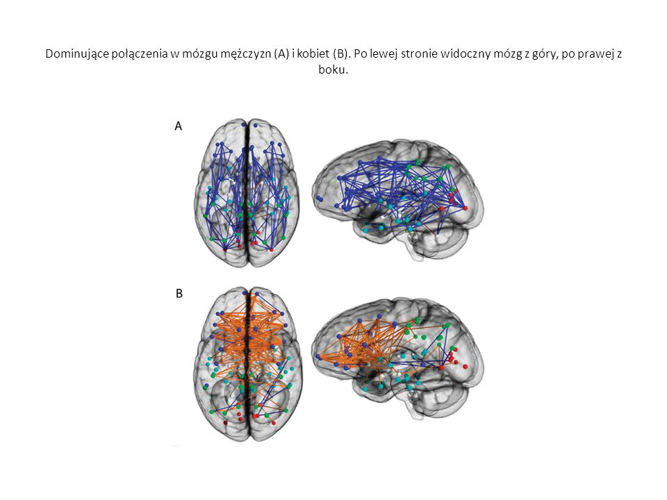 Dominujące połączenia w mózgu mężczyzn (A) i kobiet (B)
