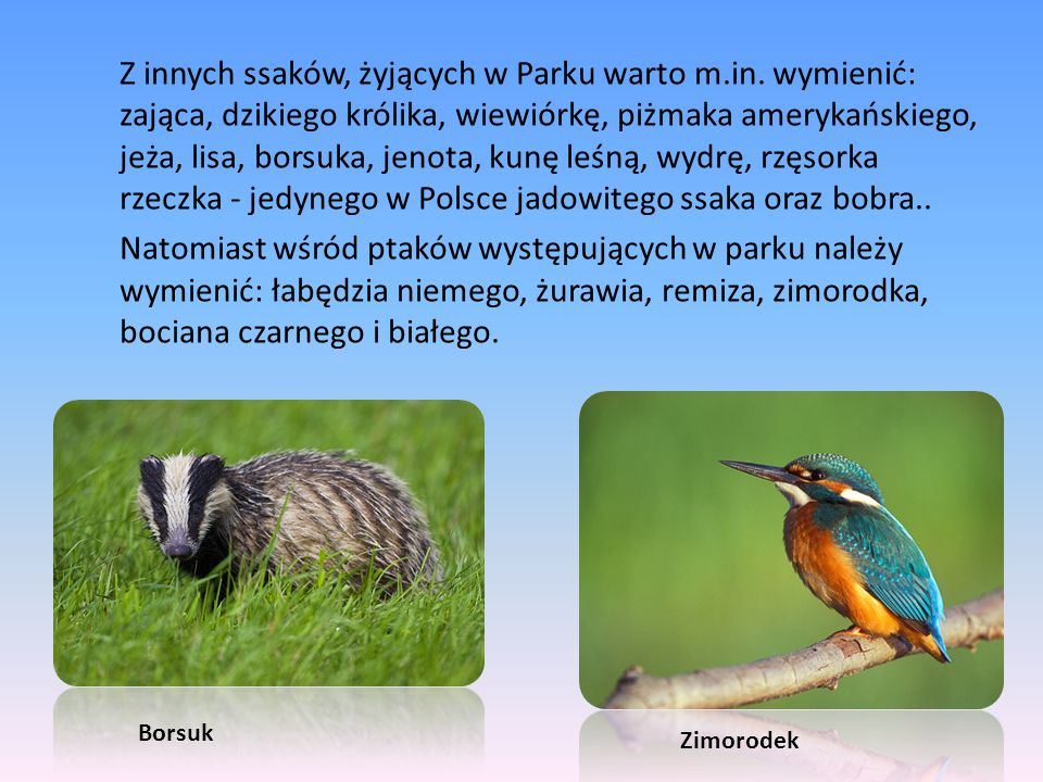 Z innych ssaków, żyjących w Parku warto m. in