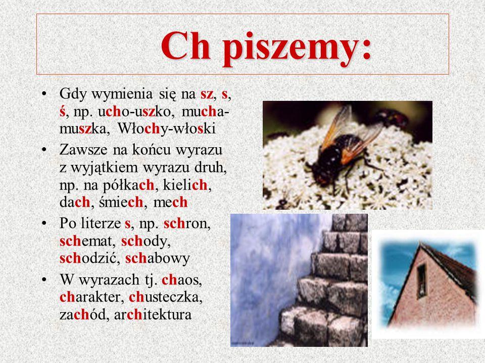Ch piszemy: Gdy wymienia się na sz, s, ś, np. ucho-uszko, mucha-muszka, Włochy-włoski.