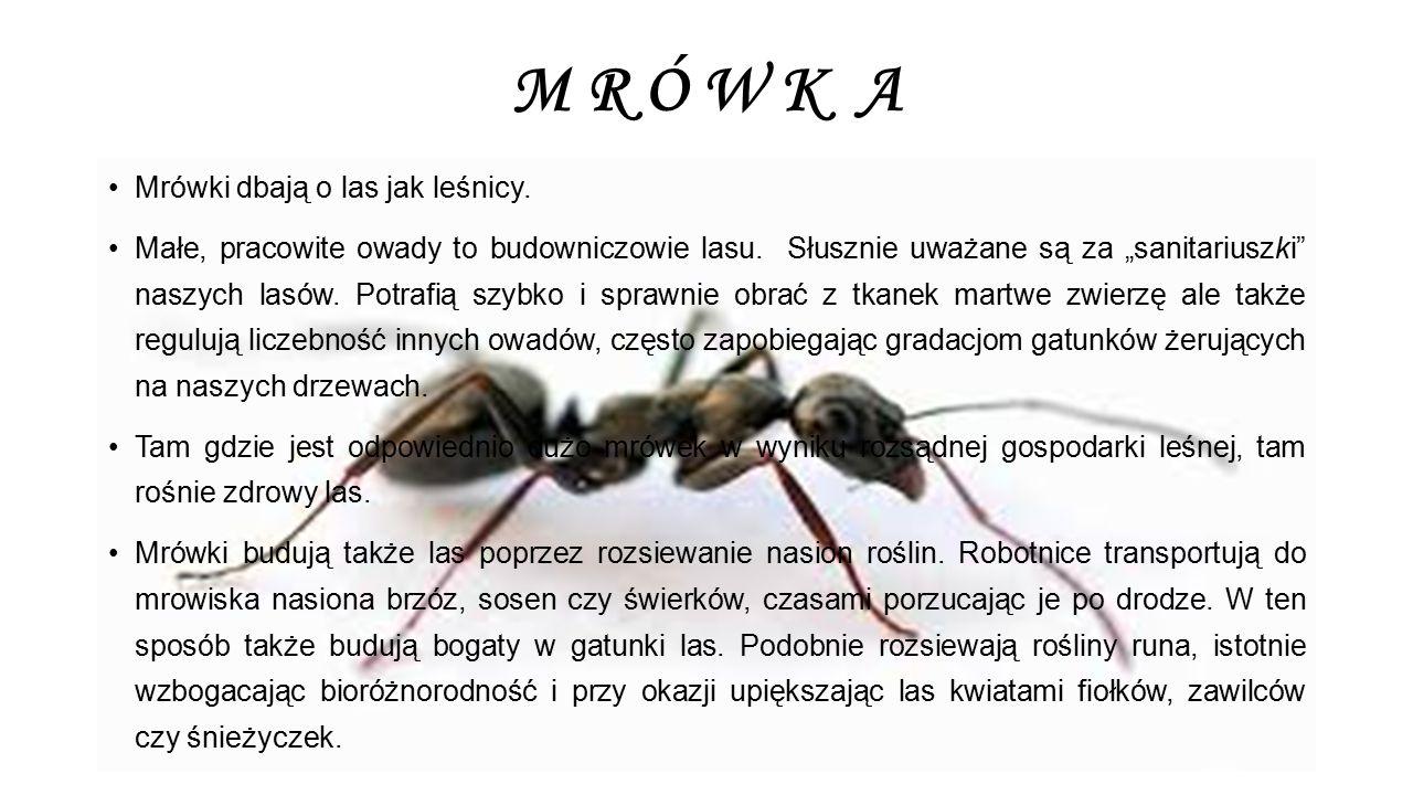 M R Ó W K A Mrówki dbają o las jak leśnicy.