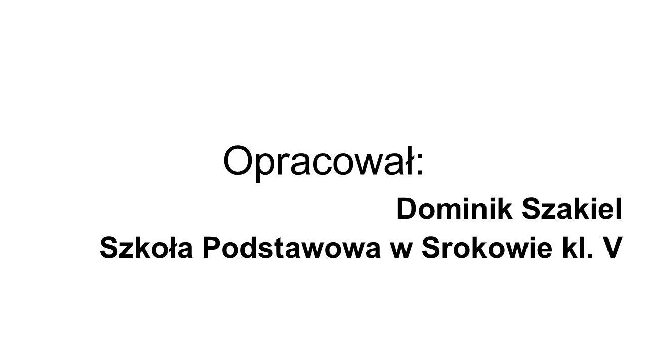 Dominik Szakiel Szkoła Podstawowa w Srokowie kl. V