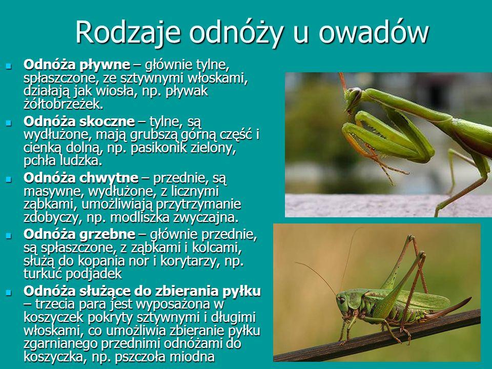 Rodzaje odnóży u owadów