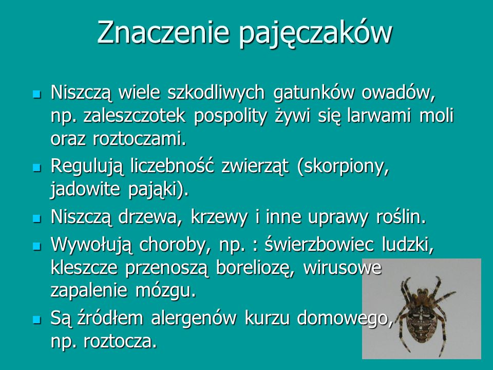 Znaczenie pajęczaków Niszczą wiele szkodliwych gatunków owadów, np. zaleszczotek pospolity żywi się larwami moli oraz roztoczami.