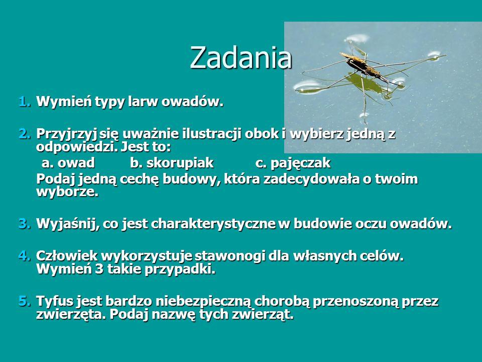 Zadania Wymień typy larw owadów.