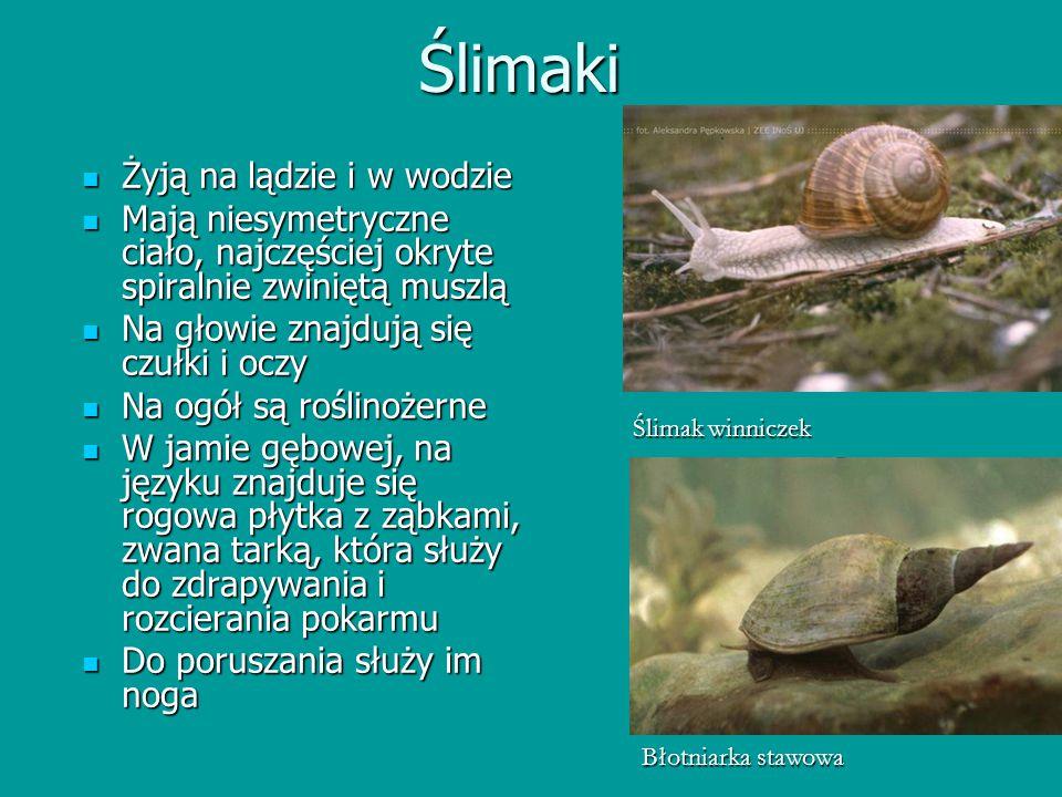 Ślimaki Żyją na lądzie i w wodzie