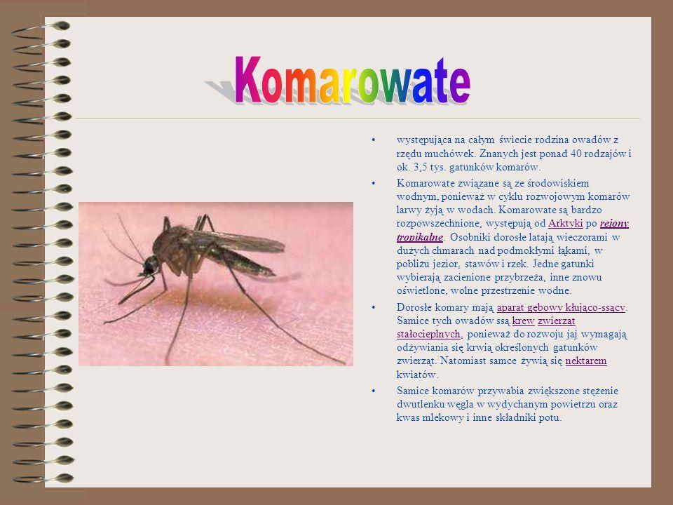 Komarowate występująca na całym świecie rodzina owadów z rzędu muchówek. Znanych jest ponad 40 rodzajów i ok. 3,5 tys. gatunków komarów.