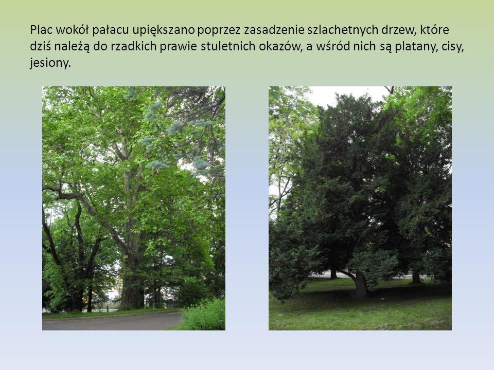 Plac wokół pałacu upiększano poprzez zasadzenie szlachetnych drzew, które dziś należą do rzadkich prawie stuletnich okazów, a wśród nich są platany, cisy, jesiony.