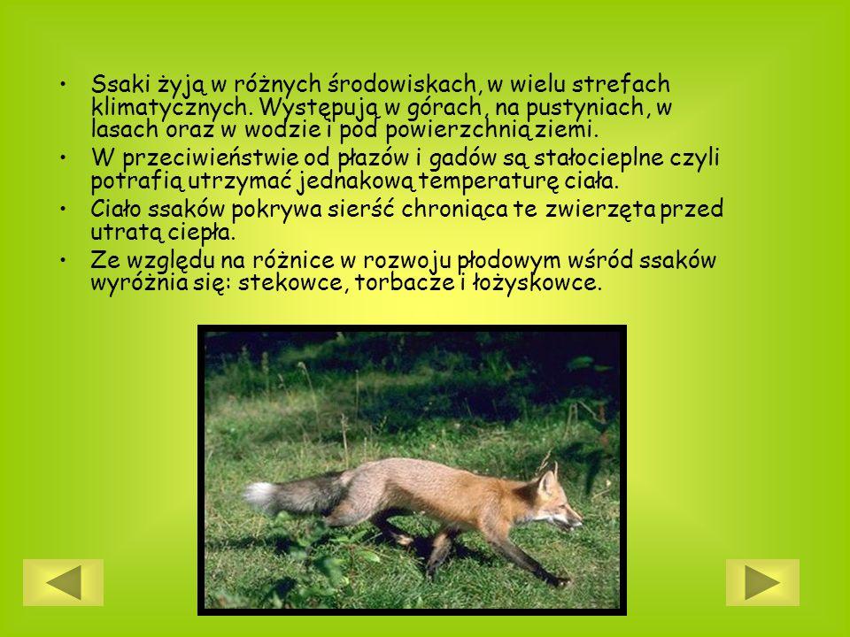 Ssaki żyją w różnych środowiskach, w wielu strefach klimatycznych