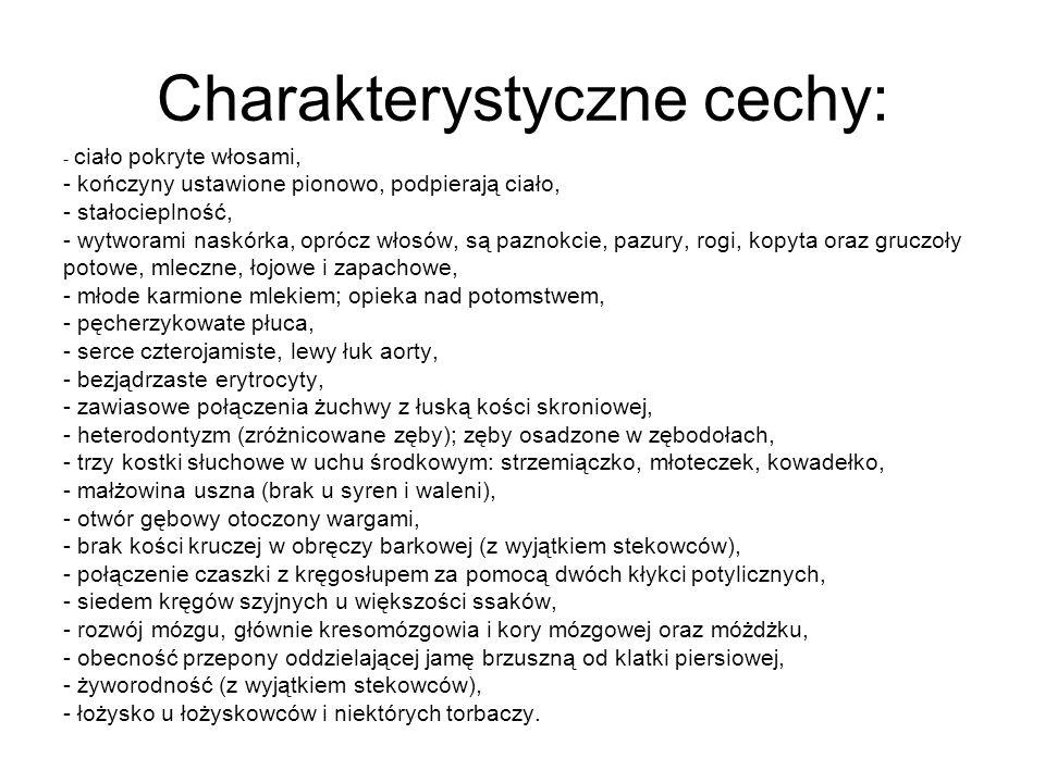 Charakterystyczne cechy: