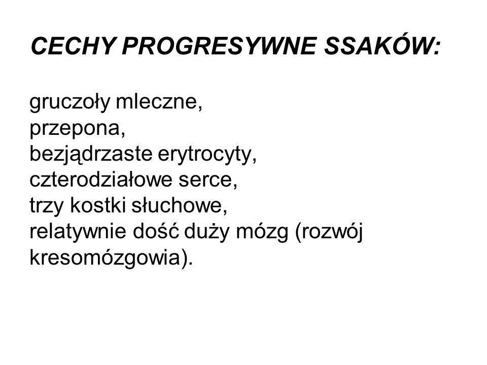 CECHY PROGRESYWNE SSAKÓW: