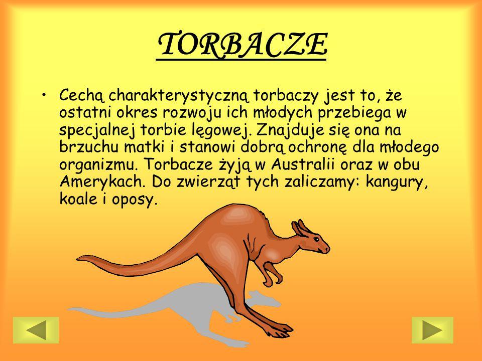 TORBACZE