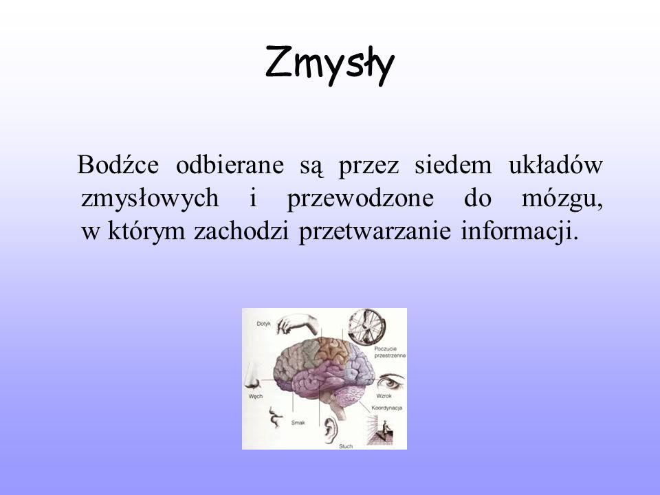 Zmysły Bodźce odbierane są przez siedem układów zmysłowych i przewodzone do mózgu, w którym zachodzi przetwarzanie informacji.