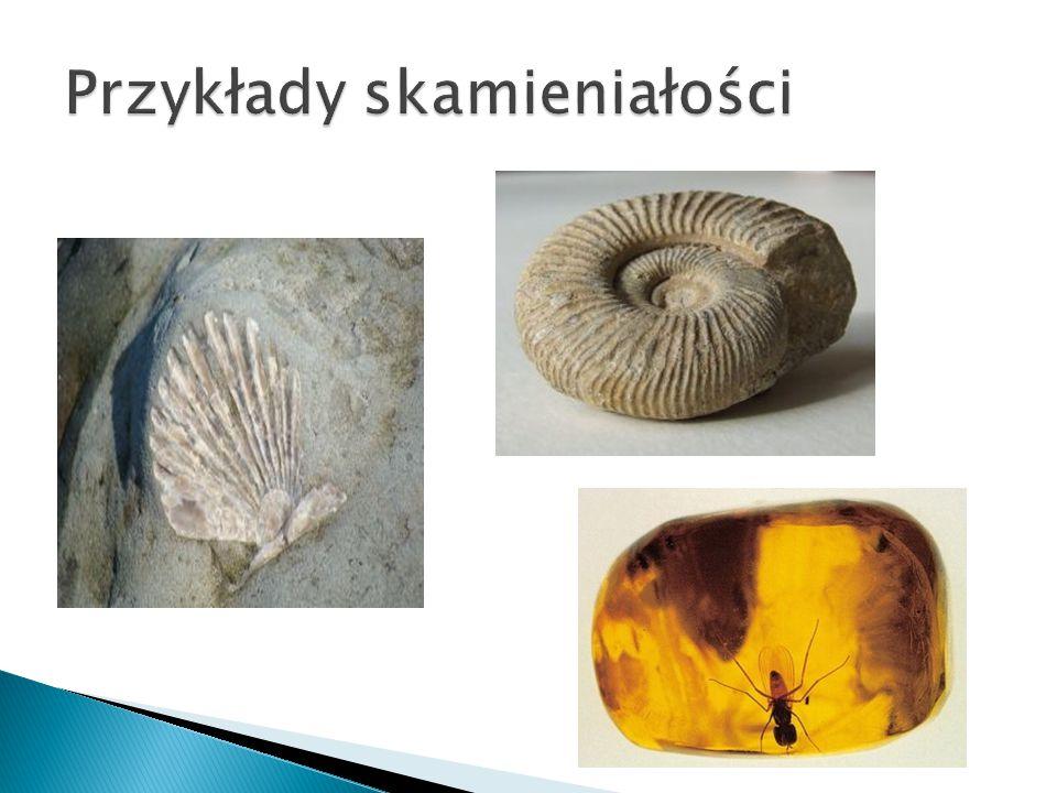 Przykłady skamieniałości