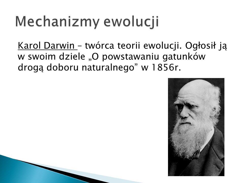 Mechanizmy ewolucji Karol Darwin – twórca teorii ewolucji.