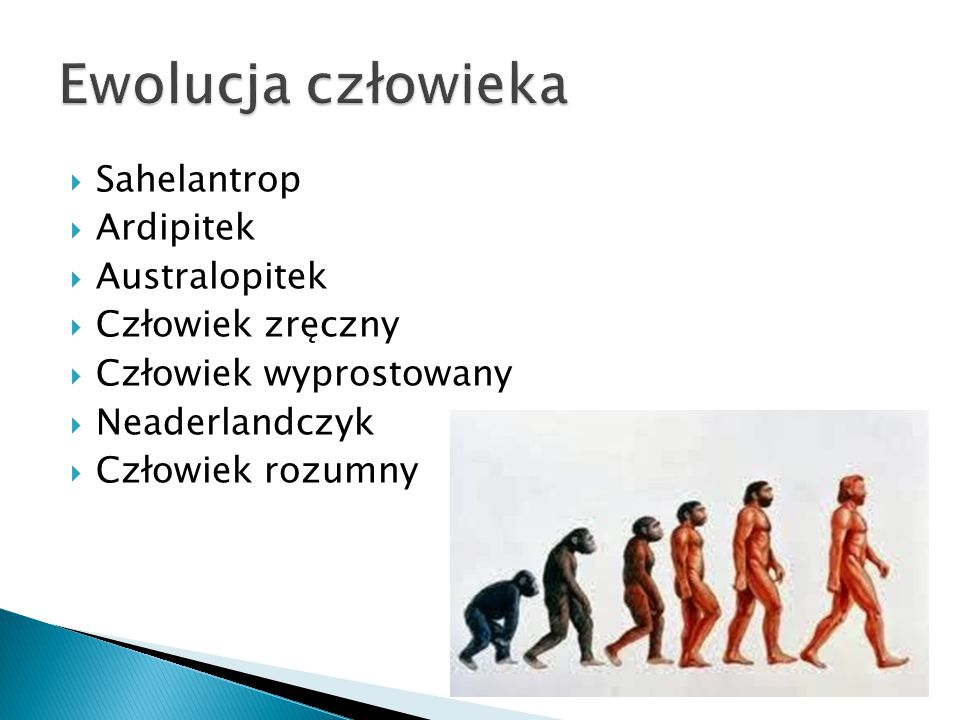 Ewolucja człowieka Sahelantrop Ardipitek Australopitek