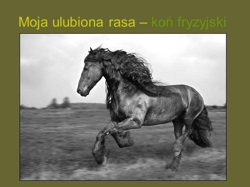 Moja ulubiona rasa – koń fryzyjski