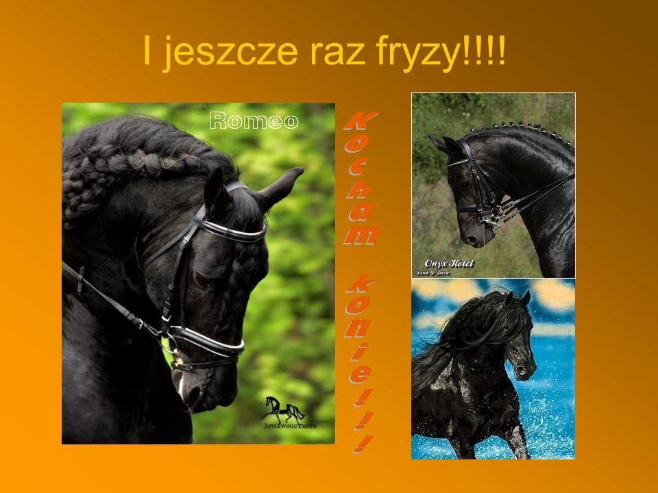 I jeszcze raz fryzy!!!! Kocham konie!!!