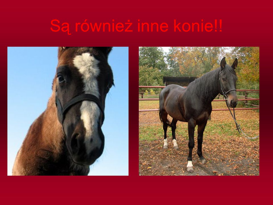 Są również inne konie!!