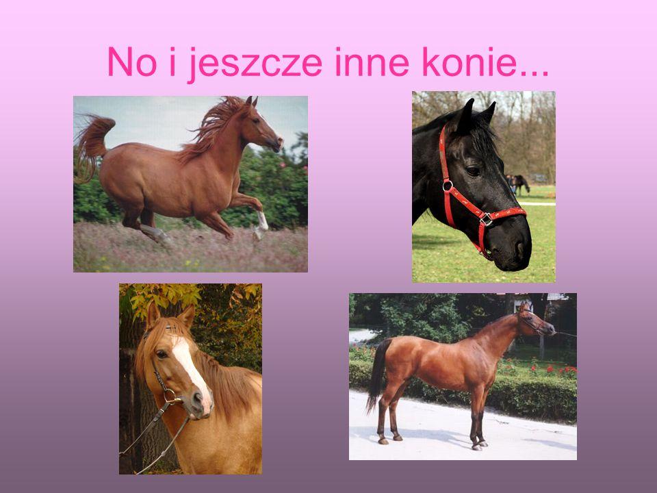 No i jeszcze inne konie...