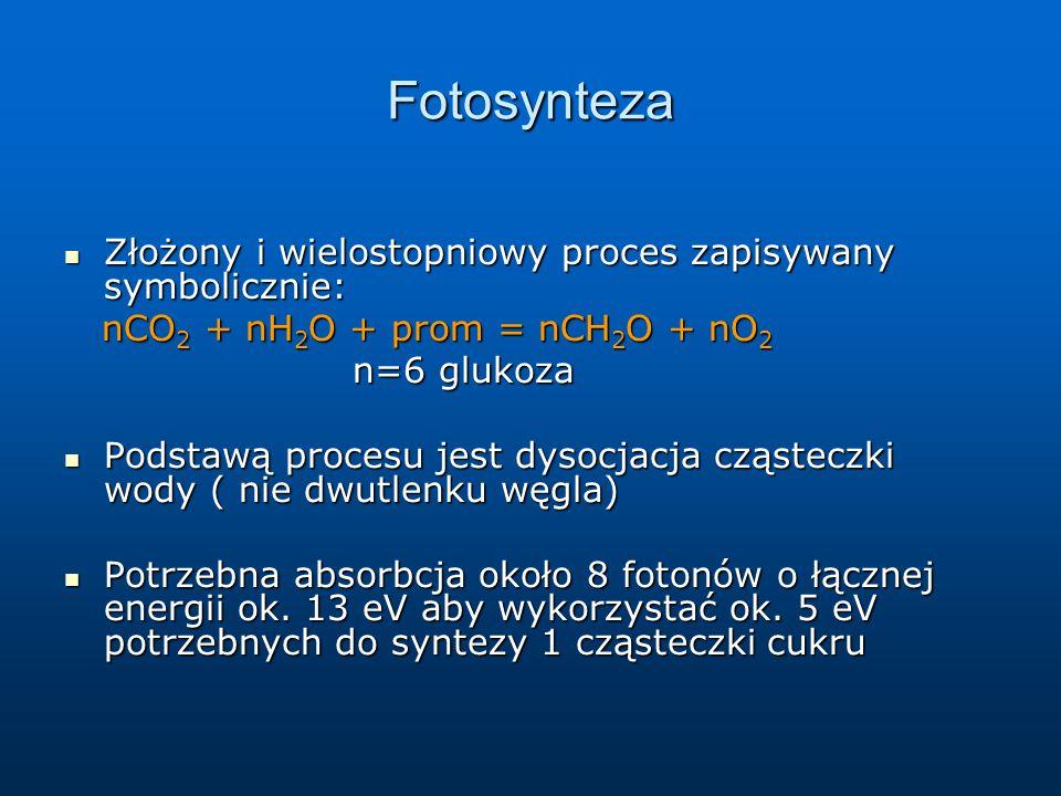 Fotosynteza Złożony i wielostopniowy proces zapisywany symbolicznie: