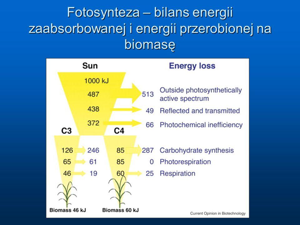 Fotosynteza – bilans energii zaabsorbowanej i energii przerobionej na biomasę