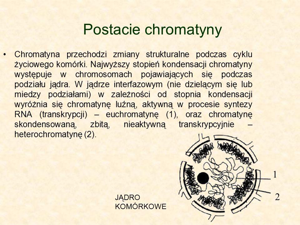 Postacie chromatyny