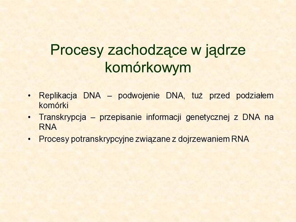 Procesy zachodzące w jądrze komórkowym