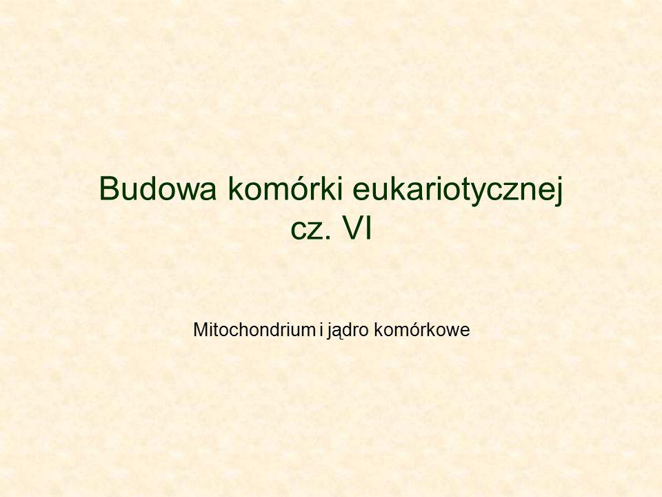 Budowa komórki eukariotycznej cz. VI