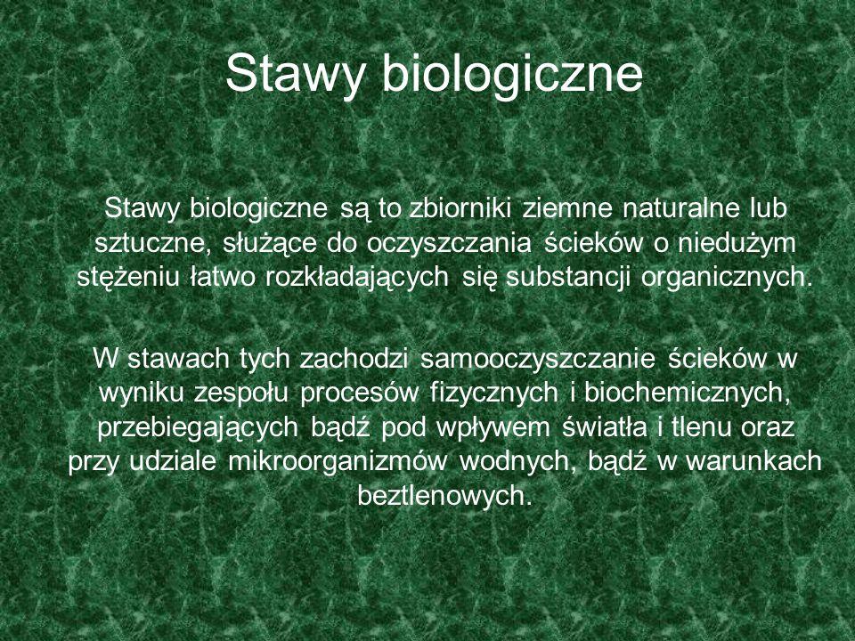 Stawy biologiczne