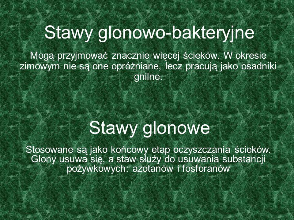Stawy glonowo-bakteryjne